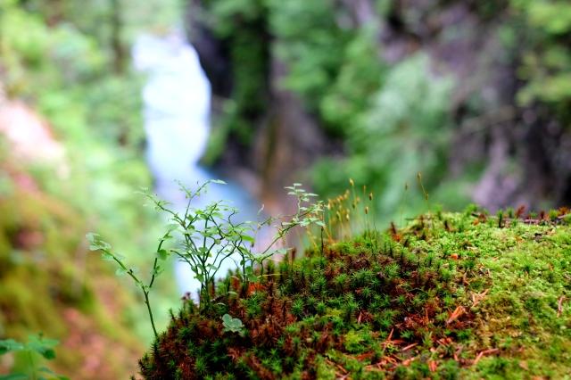 The Predaselj gorge / soteska Predaselj.
