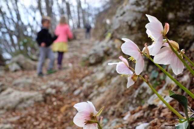 Hiking to Vogar in spring; spring flowers, kids.