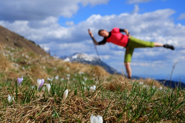 Mountains, flowers, crocuses, woman mountaineer, sun