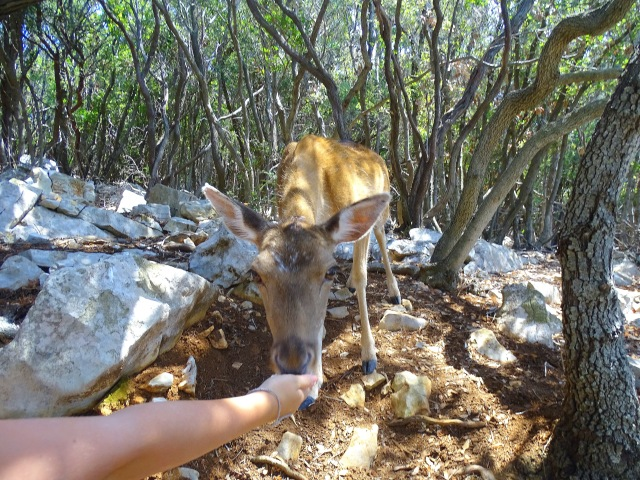 Deer taking food from a hand