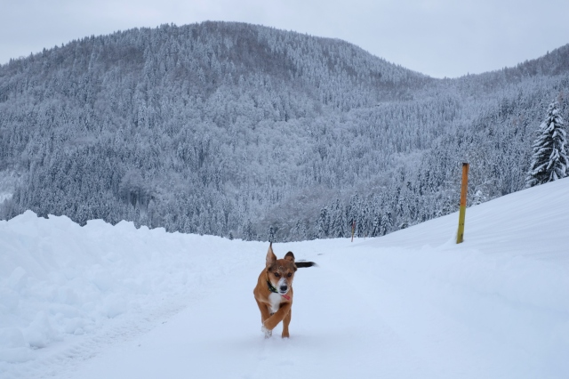 A puppy having fun in the mountains, Slovenia, Škofja Loka