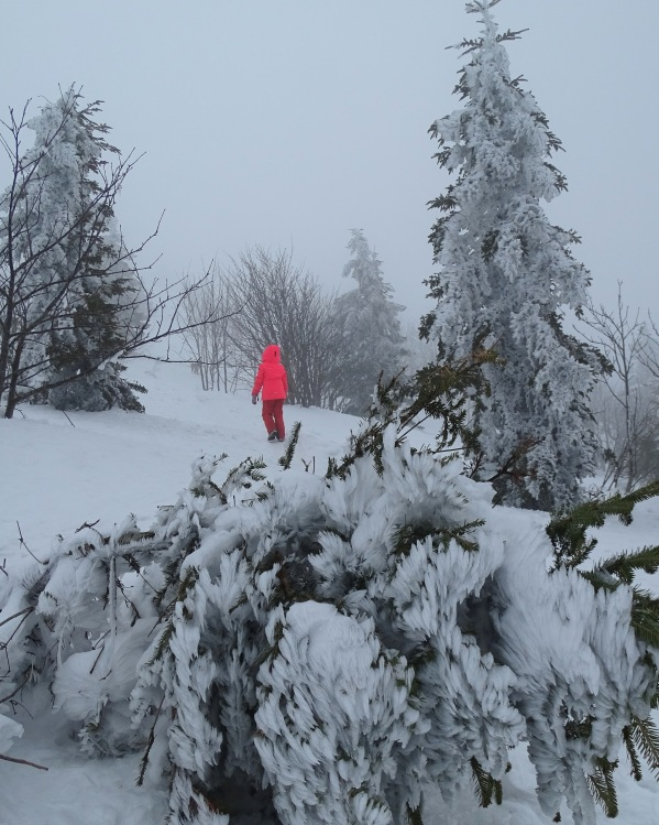 Frozen trees on the way to Snežnik, Slovenia, winter