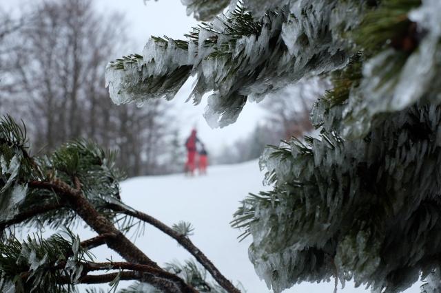 Snežnik in winter, ice, frozen trees, Slovenia