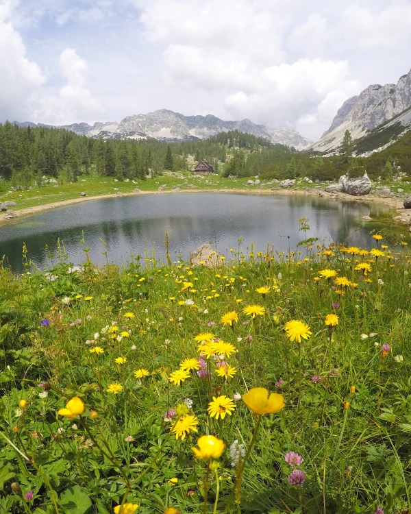 Triglav Lakes in summer, flowers