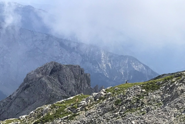 An Alpine ibex in the Kamnik-Savinja Alps, Slovenia