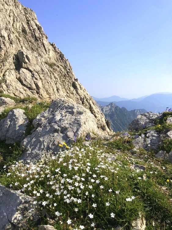 Flowers on the way to Mt. Turska Gora, Kamnik-Savinja Alps
