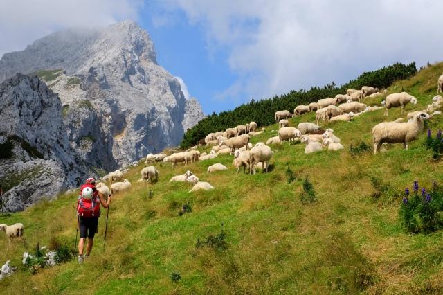 Hiking in the Kamnik-Savinja Alps, Ojstrica