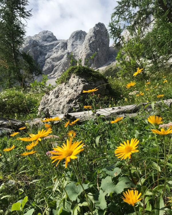 The Kamnik-Savinja Alps and flowers along the trail