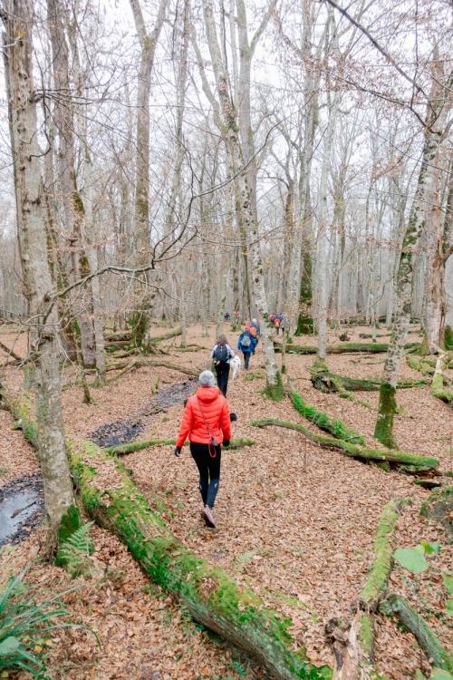 Č'bular Walk, Autumn Posavje Hiking Festival, Krakov Forest, Slovenia