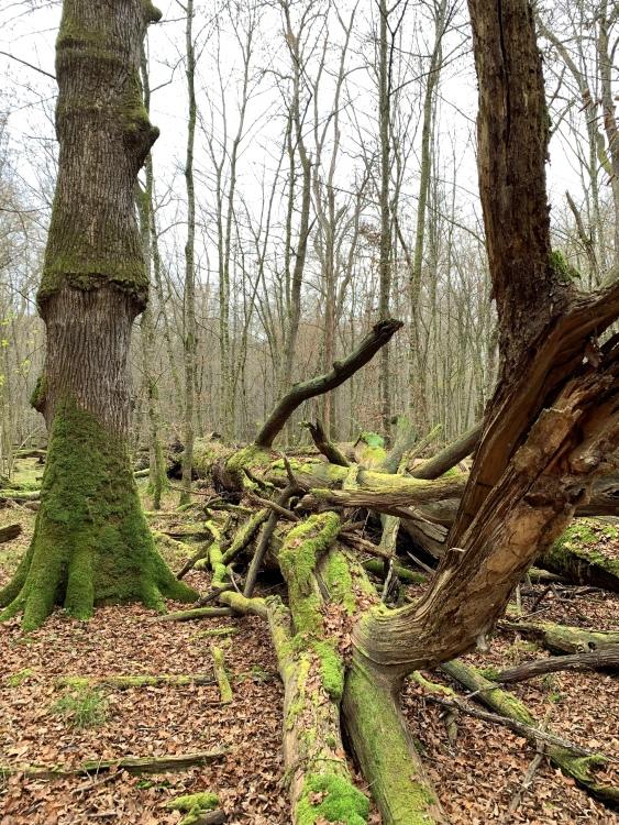 Krakov Virgin Forest, Krško, Kostanjevica na Krki, Slovenia