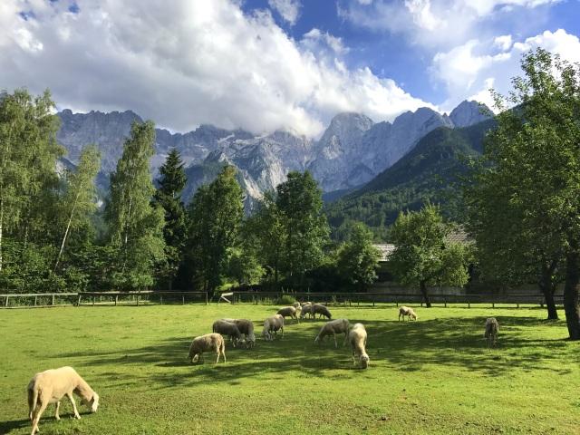 Martuljek Mountain Group as seen from Gozd Martuljek near Kranjska Gora, Slovenia